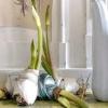 Купівля квіткових цибулин