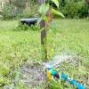 Полив дерев: від саджанця до дорослого дерева