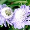 Проект квітника: квітник круглий рік
