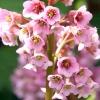 Проект квітника: сухий миксбордер