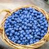 Пролежні і попрілості - лікування травами, рецепти