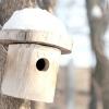 Птахи в саду: будиночки