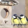 Птахи в саду: годівниці і зимовий прикорм