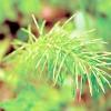 Рослини-індикатори кислотності грунту