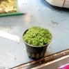 Розмноження і посадка водних рослин