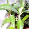 Риніт, лікування травами, рецепти