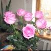 Троянди просто так!