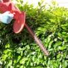 Сад та город: сезонні роботи в липні