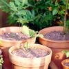 Сад з насіння