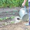 Сезонні роботи в саду і городі: кінець травня - початок червня