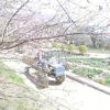 Сезонні роботи в саду і городі: кінець березня - початок квітня