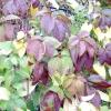 Сезонні роботи в саду і городі: перший тиждень жовтня