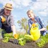 Сезонні роботи в саду і городі: перший тиждень червня