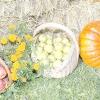 Сезонні роботи в саду і городі: третій тиждень березня