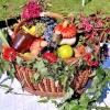Сезонні роботи в саду і городі: третій тиждень вересня