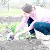 Сезонні роботи в саду і городі: другий тиждень червня