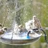 Спа-салон для пернатих або все про поїлках і купальнях для птахів