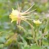 Середній ярус тінистого квітника