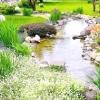 Стиль водойми і вибір рослин для його оформлення