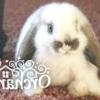 Чи варто завести вдома декоративного карликового кролика, і в чому його особливості?