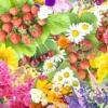 Трави, що знижують цукор в крові. рецепти
