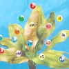 Добрива: вітаміни для зелених вихованців