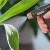 Догляд за кімнатними рослинами взимку