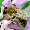 Догляд за бджолами взимку, нестача корму, підгодівля бджіл, зберігання сот з пергою