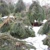 Укриття рослин на зиму