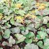 Верхній ярус тінистого квітника