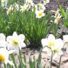 Весняна фото сесія для душі