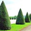 Види садової обрізки
