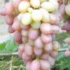 Виноград Денал