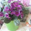 Віола на підвіконні, а в душі - весна!