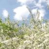 Вишневий сад