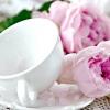 """Вибираємо сорт: """"порцелянові"""" троянди"""