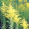 Захворювання нирок і сечовивідних шляхів - лікування травами, різні рецепти