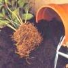 Земля для кімнатних рослин