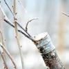 Зимова щеплення