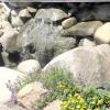 8 Правил розміщення рослин в рокарії