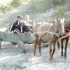А в селі - коні