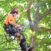 Арбористика і арбористи: видалення дерев та догляд за ними на висоті