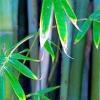 Бамбукова пальма та інші види тропічних рослин з докладними описами