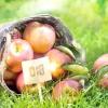 """Біопрепарати - альтернатива шкідливою садової """"хімії"""""""