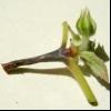 Хвороби рослин