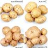 Найдешевші популярні ранньостиглі та середньоранні сорти картоплі