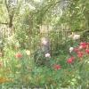 Що робити навесні і влітку в екосаду і городі