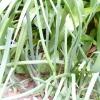 Що з чим зростає? сумісність рослин на грядці