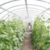 Чудо-город - як вирощувати рослини в теплиці