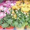 Квітник на зрізання: літо і осінь
